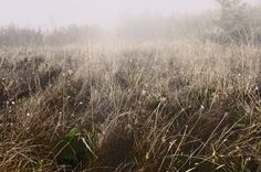 AUTUMN MEADOW My Eyes, Autumn, Plants, Photography, Photograph, Fall, Fotografie, Photo Shoot, Planters