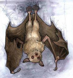 Art Nouveau Bat - Google Search