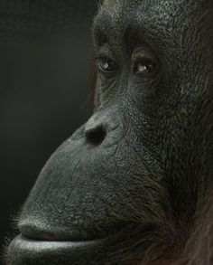 Primates, Mammals, Cute Creatures, Beautiful Creatures, Animals Beautiful, Baby Animals, Funny Animals, Cute Animals, Animal Mugs