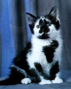 Moo kitty! XD