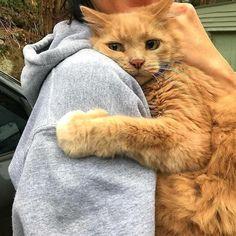 #catofinstagram #catoftheday #catlover #catsagram #catlovers #cat_features #catlady #cateye #catholic #catlife #catlove #catsgram #cutecat #cutecats #meow #kittycat #catinstagram #catsclub #cats_of_instagram #kitty #ilovemycat #caturday #catsofig #thedailykitten #bestmeow #excellent_cats