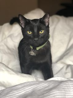 Here's a photo of my sweet little Oscar 🖤 Kittens And Puppies, Cats And Kittens, Crazy Cat Lady, Crazy Cats, Black Animals, Cute Animals, Massage Meme, Baby Massage, Kittens Cutest