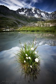 """Alpine garden - Summer view of a famous mountain of Ecrins National Park in french alps, called """"Les Agneaux"""" (the lambs). An amazing place. Places Around The World, Around The Worlds, Beautiful World, Beautiful Places, Alpine Garden, Image Nature, French Alps, Photos Voyages, France Travel"""