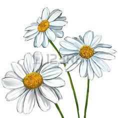 dessin fleur: daisy illustration tirée par la main aquarelle peinte