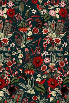 Nightfall Fabulous botanical wallpaper pattern with red flowers and mandrills.Fabulous botanical wallpaper pattern with red flowers and mandrills. Botanical Wallpaper, Red Wallpaper, Pattern Wallpaper, Wallpaper Backgrounds, Iphone Wallpaper, Vintage Wallpaper Patterns, Red Flower Wallpaper, Bathroom Wallpaper, Wallpaper Quotes