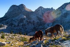 Prenj Mountain, Bosnia and Herzegovina Bosnia And Herzegovina, Alps, Farm Animals, Boxing, Beautiful Places, Outdoors, Earth, Horses, Mountains