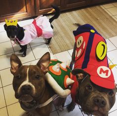 My puppers' Halloween costumes this year: Bowser Mario and Princess Peach. Bowser Costume, Mario Costume, Puppy Costume, Diy Dog Costumes, Halloween Puppy, Halloween 2019, Halloween Diy, Halloween Costumes, Peach Costume