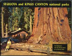 Giant California Seqouia Redwoods tree   grow in sequoia trailscomment or sequoia gigantea is sequoia the #California State Tree