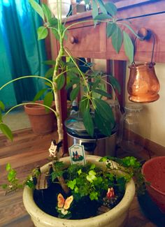 How to make a fairy garden out of a house plant.