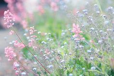 Цветы фотографа Алисии Роджик (Alicja Rodzik)