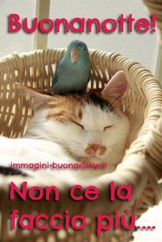 Unlikely Animal Friends, Grey Kitten, Good Night, Animation, Animals, Gif, Facebook, Gardening, Nighty Night