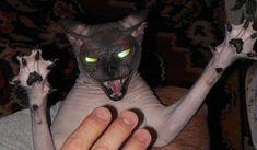 20 фото, которые раскрывают страшную тайну котов