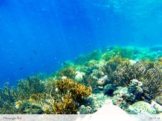 An other nice blog about probably the best snorkeling in Bali. But this is 4 hours drive from Denpasar ...