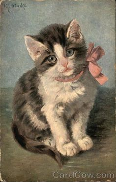 Vintage grey and white kitten wearing pink bow 16