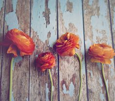 Ranunculus | by Andrea McClain