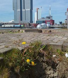 Erasmusbrug  Tillemakade foto: Heleen van Zantvoort Rotterdam, New York Skyline, Travel, Viajes, Destinations, Traveling, Trips