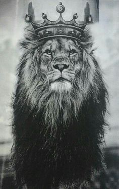 In Nicholas C G Rothwell's screenplay Libertas a lion appears once and reminds lead character of courage.
