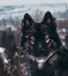 beautiful dogs I cant believe how much Joey keeps changing I also couldnt get over the beautiful view I found 10 minutes from my backyard . Animals And Pets, Baby Animals, Cute Animals, Cute Dogs And Puppies, Pet Dogs, Doggies, Beautiful Dogs, Animals Beautiful, Agouti Husky