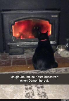 Ich glaube, meine Katze beschwört einen Dämon herauf..   Lustige Bilder, Sprüche, Witze, echt lustig
