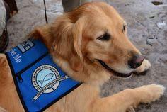 Ciência explica: cães ajudam na recuperação após tragédias