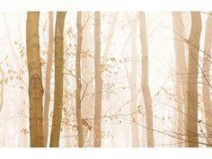 Fototapete Early Morning in verschiedenen Größen - als Papiertapete oder Vliestapete wählbar - PVC frei, geruchloser, umweltfreundlicher Latexdruck ohne Lösemittel - Motivtapete Postertapete Bildtapete Wall Mural von Trendwände