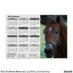 #Face of a #Brown #Horse #calendar #2016 #DINA4 #Poster   #Zazzle