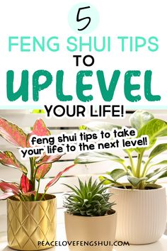 Feng Shui Guide, Feng Shui Basics, How To Feng Shui Your Home, Feng Shui Cures, The Slate, I Am Grateful, New Opportunities, Give Thanks