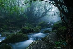 Mononoke forest, Yakushima island - OMG! There's such a place?!
