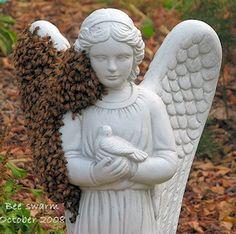 angelic bee swarm #honeybees #angel #statue