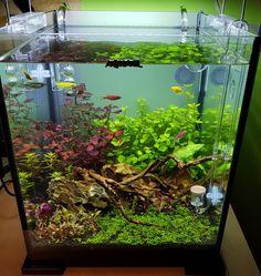 PN Aquascape #aquariumideasfreshwater
