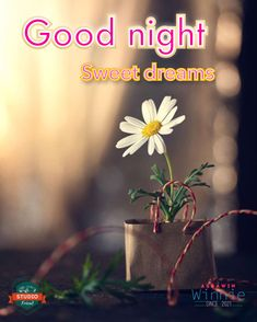 Good Night Sweet Dreams, Night Quotes, Sd, Twin, Inspiration, Good Night, Biblical Inspiration, Twins, Inspirational