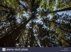 See my portfolio on Alamy.com   #stockphoto #stockphotography #stockphotos #microstocker #microstock #nature #greennature #wood #greenenergy #cleanair #earth #planet #green #sky #clean #conifer #forest #sell #sellphotos