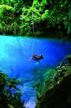 Blue Holes in Espiritu Santo Island, Vanuatu - Located just west of Fiji, on the Espiritu Santo island of Vanuatu you'll find some of the most crystal clear blue waters you've ever laid eyes on. Called blue holes, they're large, deep pools of clear, fresh water that come to the surface through layers of limestone and coral. #PinUpLive