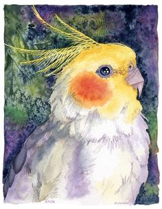 Zazu is a cockatiel who lives in Seattle, WA. But he looks amazingly like YOUR cockatiel!    This 8x10 open edition giclee print of my original
