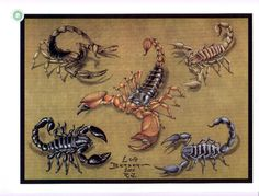 Scorpion Tattoos- my son is a Scorpio, these I like a lot