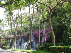 Waterfall at the Grand Wailea, Maui Hawaii