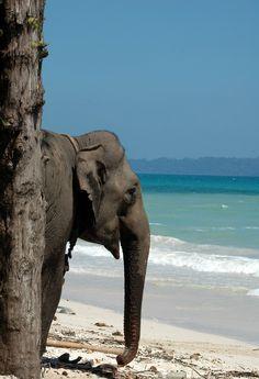 Elephant, India   www.frontiergap.com   #india #animals #volunteer