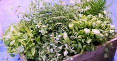 Tee anbauen auf der Fensterbank - frischer Genuss das ganze Jahr über