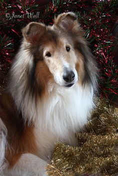 Bailey! © Janet Wall, at HowtoLoveYourDog.com, via Flickr