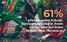 Was pflanzt ihr so? 🌱😊 Patio, Plants, Gardening