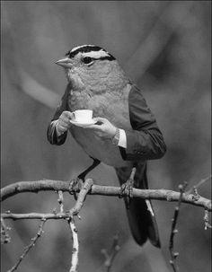 Classic T-bird!   ;)