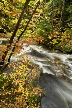 Elly's Run. Peak autumn color along a small stream in the Green Mountains of Vermont, USA