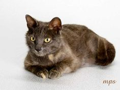 Starla from the NE Humane Society is a 10 month old sweetheart looking for a place to call home