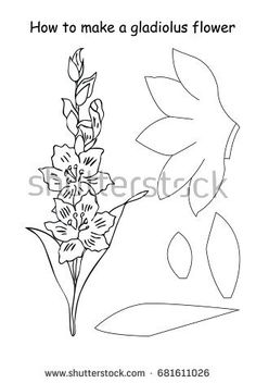 how to make a gladiolus flower outline scheme black and white colors vector