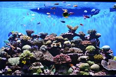 The Birch Aquarium in San Diego boasts some of the most spectacular reef ecosystems...book a vacation rental in San Diego to explore!