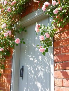 gate door with climbing roses. love the light and shadows