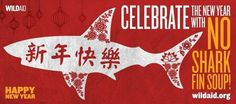 Say no to sharks fin!