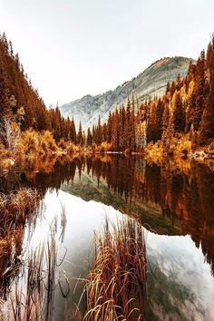 Discovered by Shorena Ratiani. Find images and videos about nature, autumn and fall on We Heart It - the app to get lost in what you love. Fall Pictures, Pretty Pictures, Happy Pictures, Herbst Bucket List, Beautiful World, Beautiful Places, Thanksgiving Wallpaper, Happy Thanksgiving, Autumn Scenery