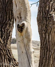 Love Tree in Farmingdale SD