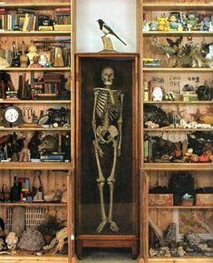 Mark Dion Cabinet of Curiosities